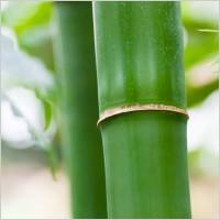 bamboo_detail_202914